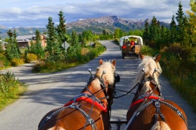 Work and Travel Alaska: Horse Wagon Guide - Practical Info