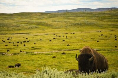 Dangers of the Yellowstone National Park: What to prepare for?